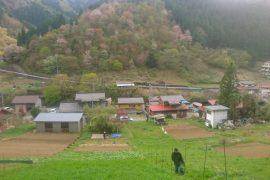斜面畑再生プロジェクト(1月〜4月)